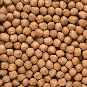 Hikari Koifutter Wheat Germ large 5 kg - 2