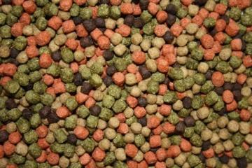 Koimix, Premium Koifuttermischung, 4 Color, Rot-Grün-Weiß-Braun, Teichfuttermix mit Spirulina, Astax, Paprika und Krillmehl, Tomodachi Sen-Sui Koifutter- und Teich-Mix, 15kg (5mm Pelletgröße) - 2