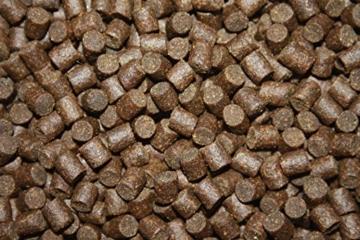 Tomodachi Störfutter energiereich, hochverdaulich, Qualitätsfutter Stör, sinkendes Kraftfutter, Aufzuchtfutter für Störe, ideal für jede Jahreszeit dank arktischer Rohstoffe, Störsinkfutter 5mm 5kg - 6