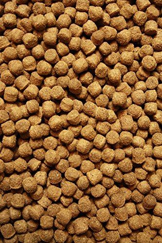 Tomodachi Koifutter, Schwimmfutter für Koi in 6mm Pelletgröße, Ganzjahresfutter Koi, All Season KoiSchwimmfutter 6 mm 15kg - 2