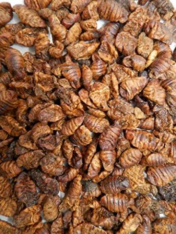 Tomodachi Seidenraupenpuppen, Silkworm, Naturnahrung getrocknet, Sanji Seidenraupen, proteinreich, gesunder Koisnack für die Handfütterung im Sommer - Vitale, schöne, handzahme Koi 5L Eimer - 5