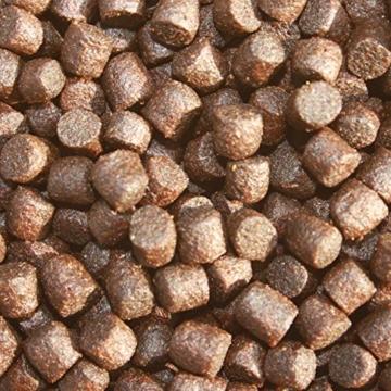 Koifutter, Wachstumsfutter, Energiefutter Koi, Tomodachi Colorbooster Schwimmfutter mit Astaxanthin für Farbschutz und Immunschutz 5kg, 6mm Koipellets - 4