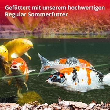 KOIPON Koi-Futter Regular für Frühling Sommer Spätsommer, 3mm, 1,75 kg - Hochwertiges Schwimmfutter für Starkes Wachstum, Farbverstärkung & gesunde Fische - auch für Goldfische - 6