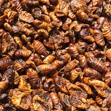KOIPON Seidenraupen PREMIUM getrocknet (3 kg) eiweißreiches Koifutter Fischfutter Farbfutter Color Koi Leckerli Seidenraupenpuppen auch für Reptilien & Schildkröten - 3